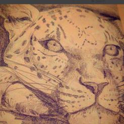 6leopard